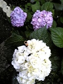 2009.5.29 009.JPG