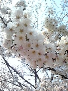 春 009.JPG