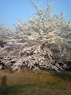 春 015.JPG