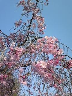 春 020.JPG