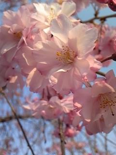 春 021.JPG
