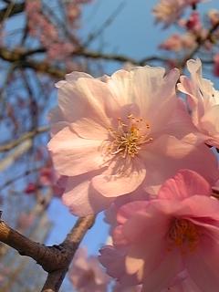 春 023.JPG