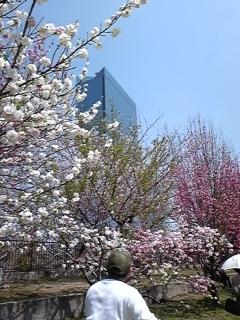 2009年4月7日 016.JPG