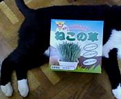 cat vegitable.jpg