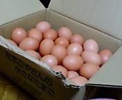 卵 二キロ.jpg